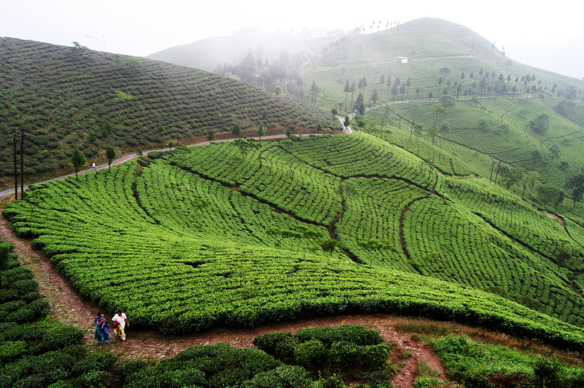 tea estate accommodation darjeeling, luxury tea resort in india, luxury tea resort in darjeeling, top luxury tea resort in india, best luxury tea resort in darjeeling,