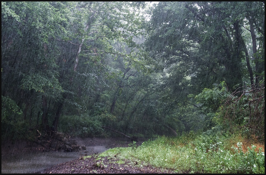 20130721101621_flint_hills_rain_forest_dll0121web